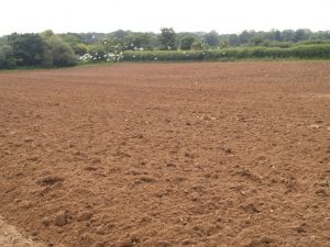 Topsoil in Winchester